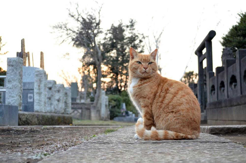 墓地のトラちゃん