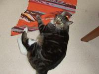 キッチンマットに猫キック