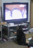 テレビたっこ