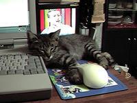 マウスとさっこ
