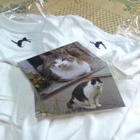 田代島猫ポストカード