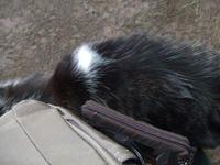 蚶満寺猫様