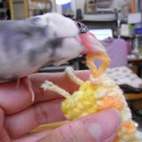 新タイプの製作に携わる桜文鳥助手
