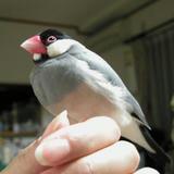指にとまってるけど、アタシは鳥じゃないわよ、決して!