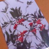 自然を写真で切り取らせたらワタシの中ではNo.1の友人のポストカード