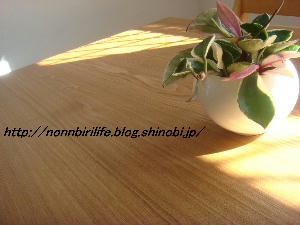 ピンクの葉っぱの観葉植物!?