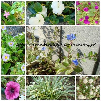 庭の花とソーラーライト