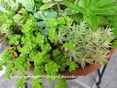 多肉植物の寄せ植えと、その魅力