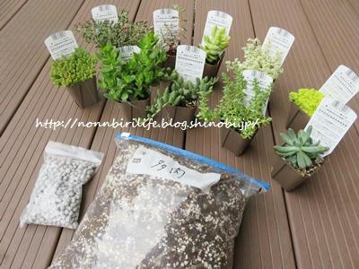 多肉植物10鉢&土・肥料セットが届きました♪