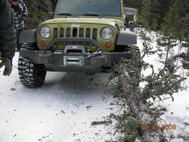 jeep_tree1.jpg