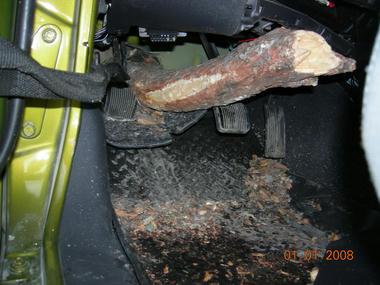 jeep_tree4.jpg