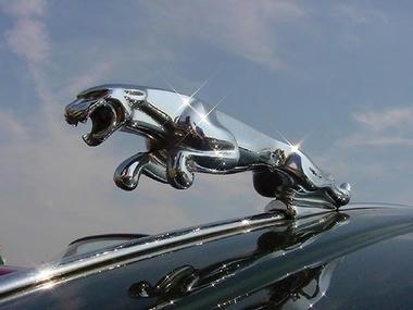 003_jaguar.jpg