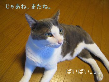IMG_4481.png