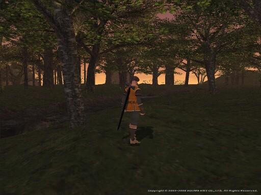 暮れ行く樹林