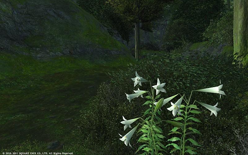 百合の花咲く