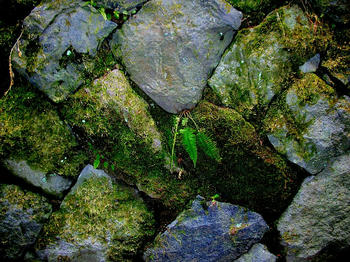 苔の生えた石垣