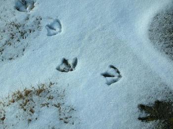 鳥の足跡のようです