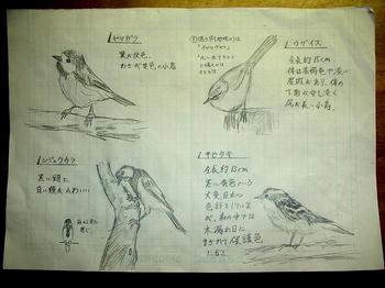 ヤマガラ/シュジュウラカ/ウグイス/キビタキ
