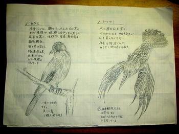 カケス/ヤマセミ