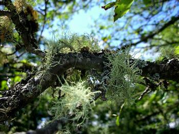 苔、木にびっしり