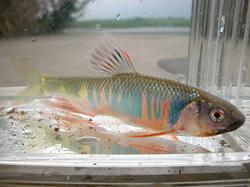 fish1904.jpg