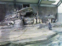 ペンギン軍団。1匹お持ち帰りしたい…