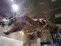 ティラノサウルス。某STGのように骨になってまでも追っかけてきたら怖そうですね…