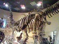 アパトサウルス。わっ、おっきいな(鼻声)