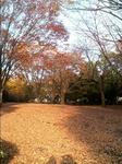 引地台公園の木々