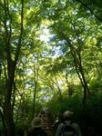 写真:高尾山「新緑」