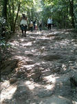 写真:高尾山「木漏れ日の道」