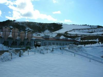 ここも伊豆です。標高800mにある牧場。まるで雪国でした。