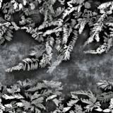 s-moss2.jpg
