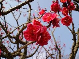 KIREI_CA3C0867.JPG