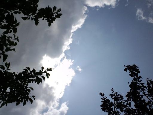 KIREI_CA3C2625.JPG