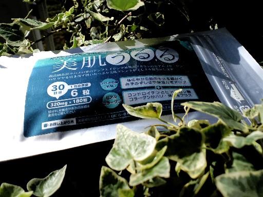 KIREI_CA3C3653.JPG