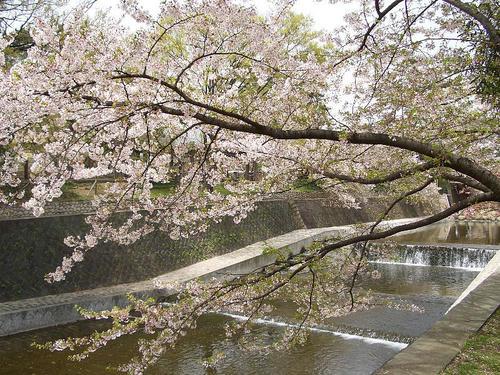 夙川公園2