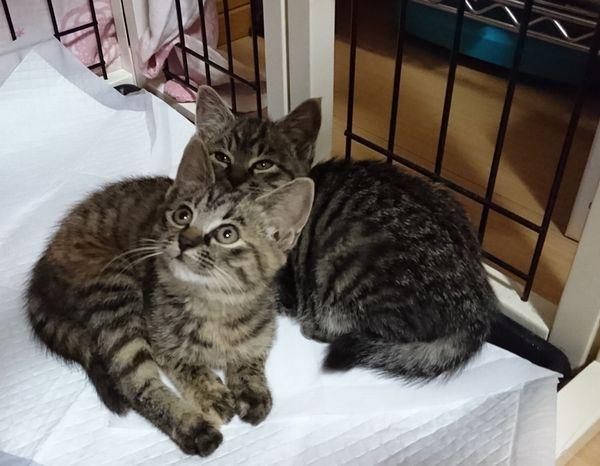アニサポさんから初の預かりっ子(猫)が来た♪【おチビちゃんだー】
