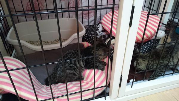 預かり猫の保護子猫の朝