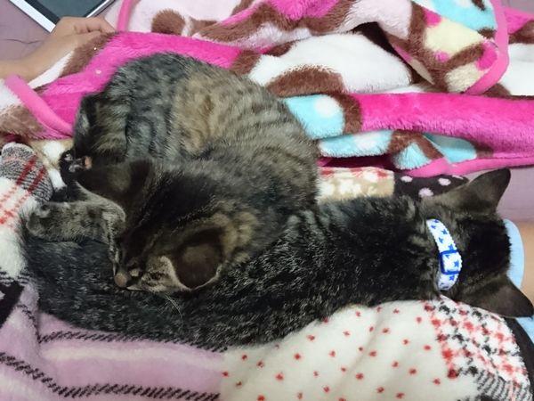 預かり猫の保護子猫のお昼寝