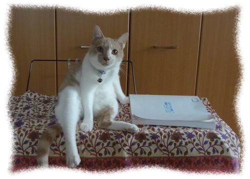 猫の預かりボランティア再開、以前と変わった点は・・・?
