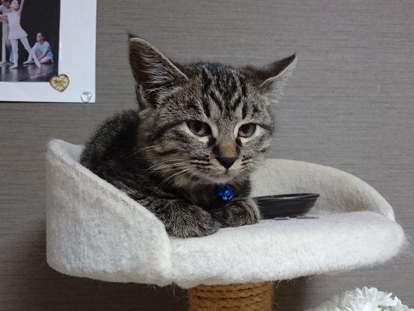 子猫の寝顔に癒される風邪っ引き娘と看病猫【キジトラ、リース】
