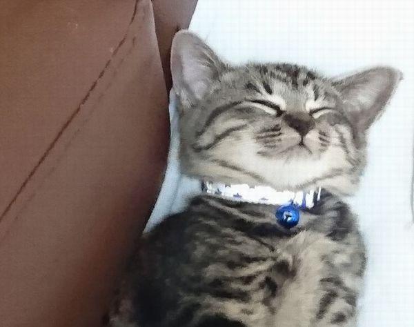 アニサポ保護猫子猫きょうだいクリスマス隊