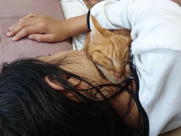 里親募集の茶白猫アニサポ保護猫