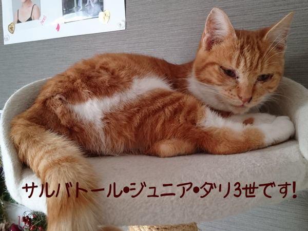 困り顔の猫さんかと思っていたら案外イケメンになる?