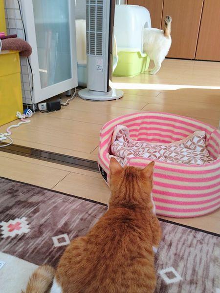 仲良くなりたい猫と断固拒否する猫の攻防戦