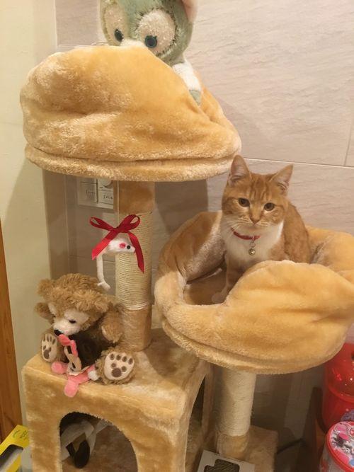 愛知・三重・岐阜犬猫保護ボラグループアニサポ保護猫