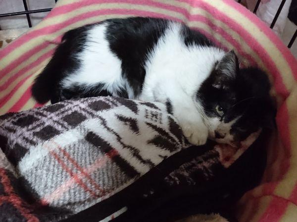風邪引き子猫、回復傾向(ここは2階建てだったにゃ)