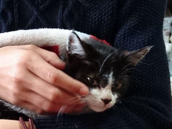 子猫がひとりぽっちで放浪していたということ【保護猫成美3日目】