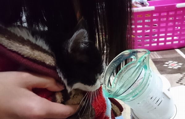 風邪っ引き子猫、スチーム吸入で潤いを!